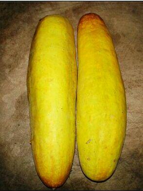 怀孕梦见黄瓜和玉米