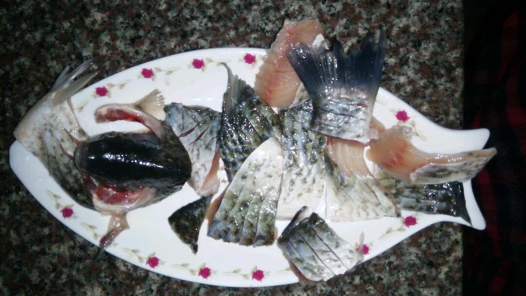 鱼内脏、鳃以及 动物内脏搅碎的泥