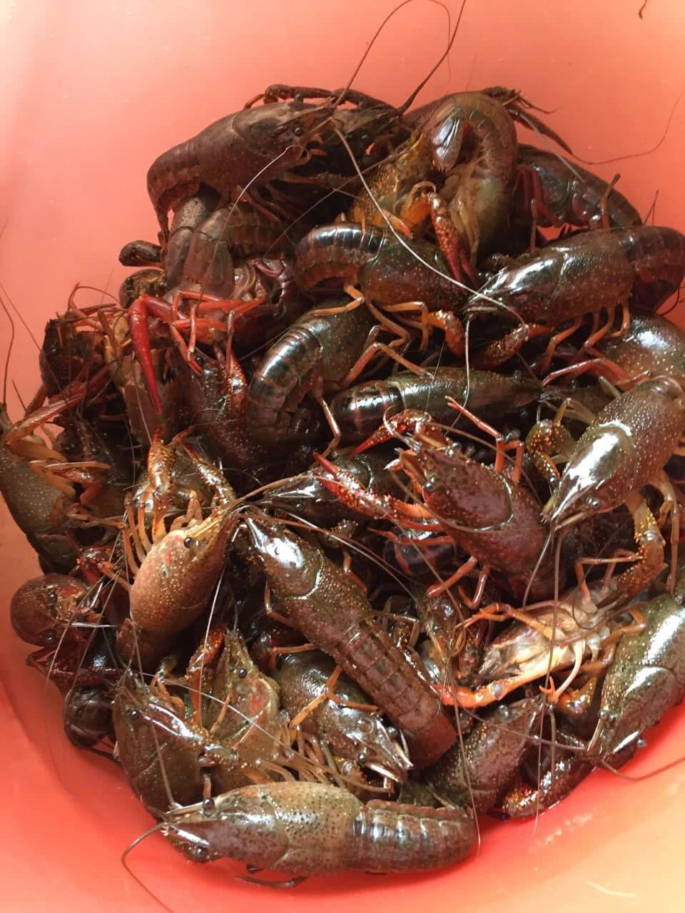 十三香龙虾的做法图解1