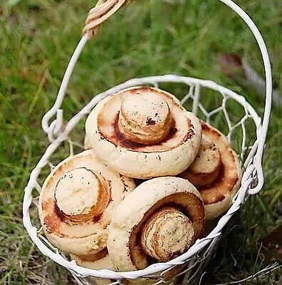 2小时前        春天来了,不用到郊外,在自己家的厨房就可以采蘑菇喔!