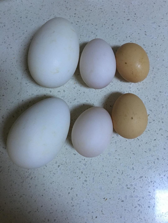 鹅蛋画可爱的图片大全