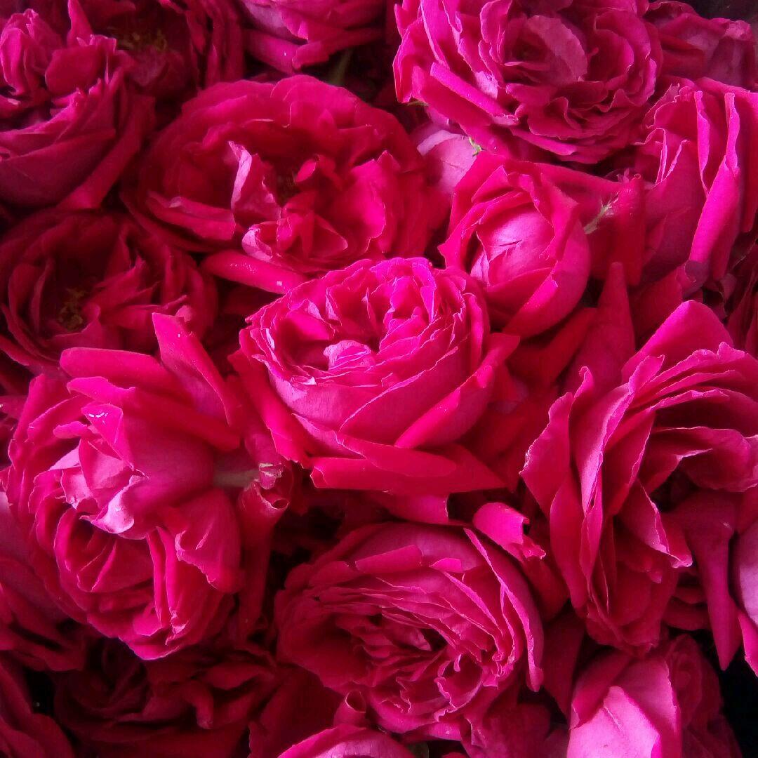 云南玫瑰花酱的做法图解2