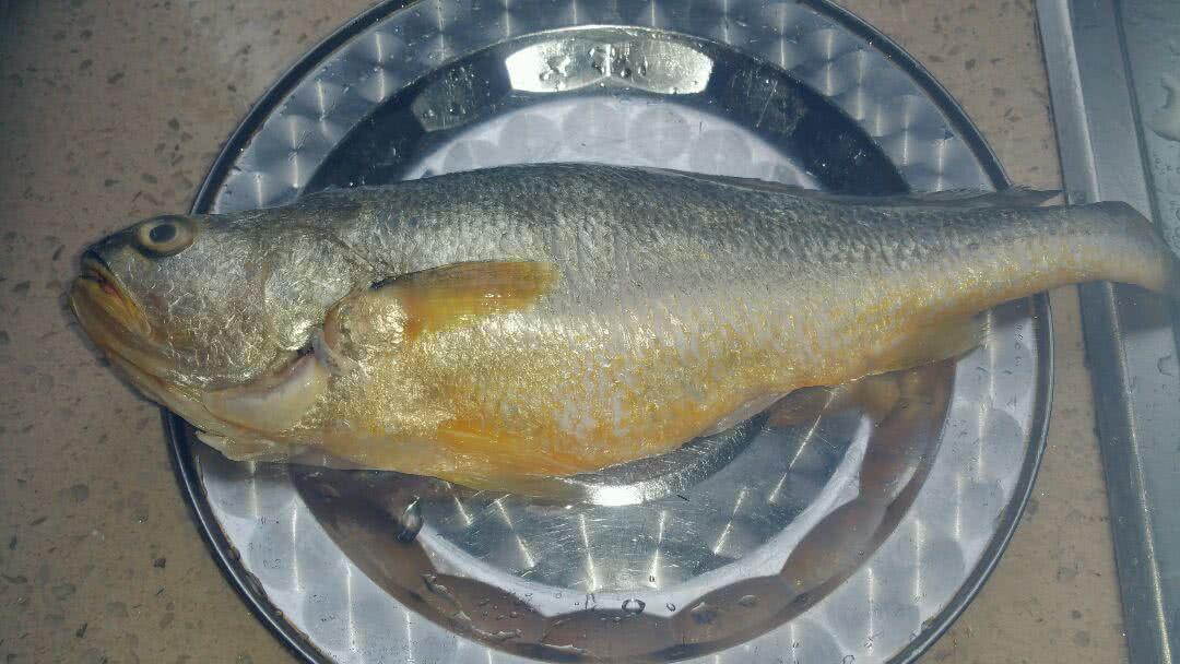 黄鱼是保护动物