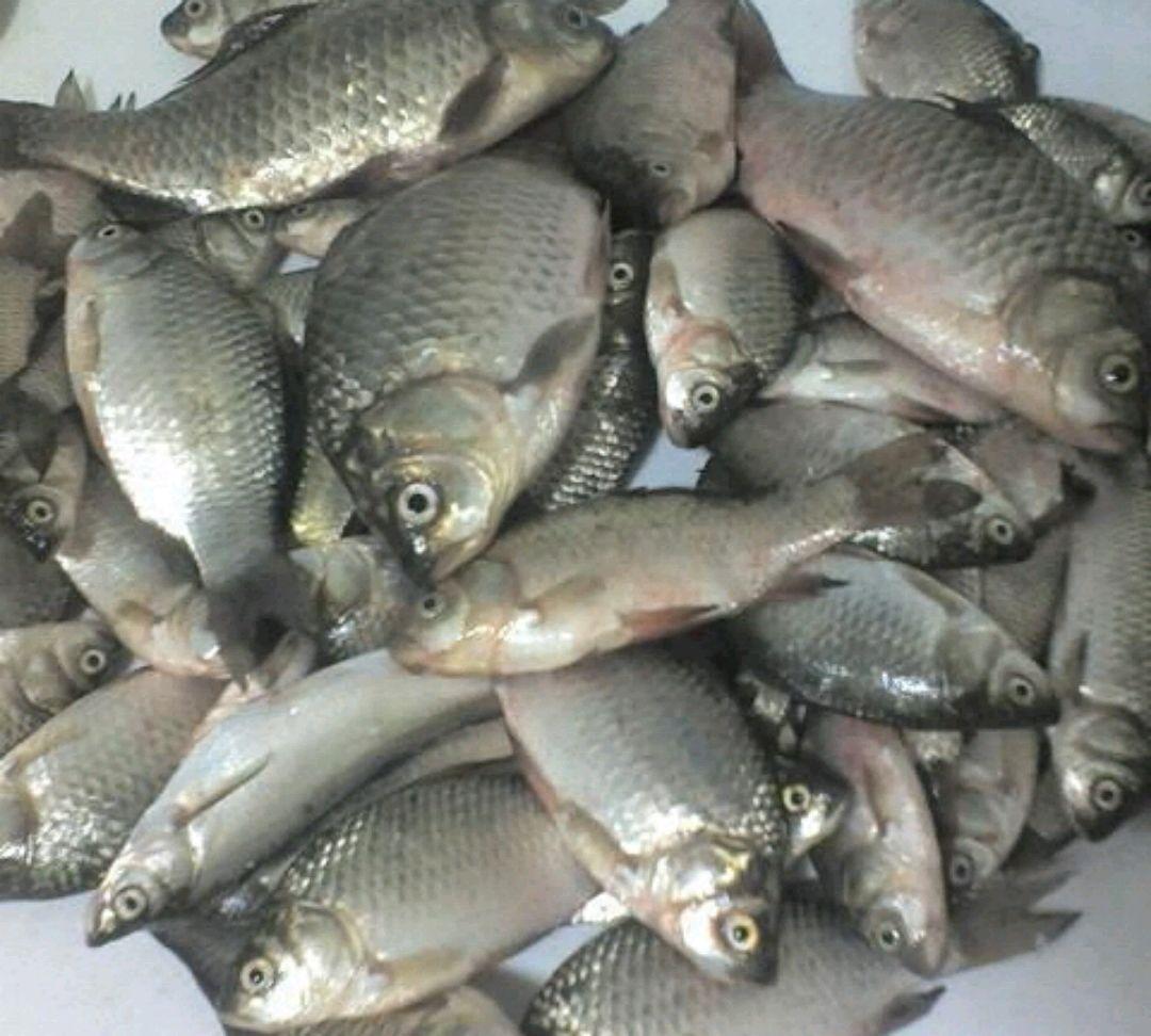 香煎小鱼的做法图解1