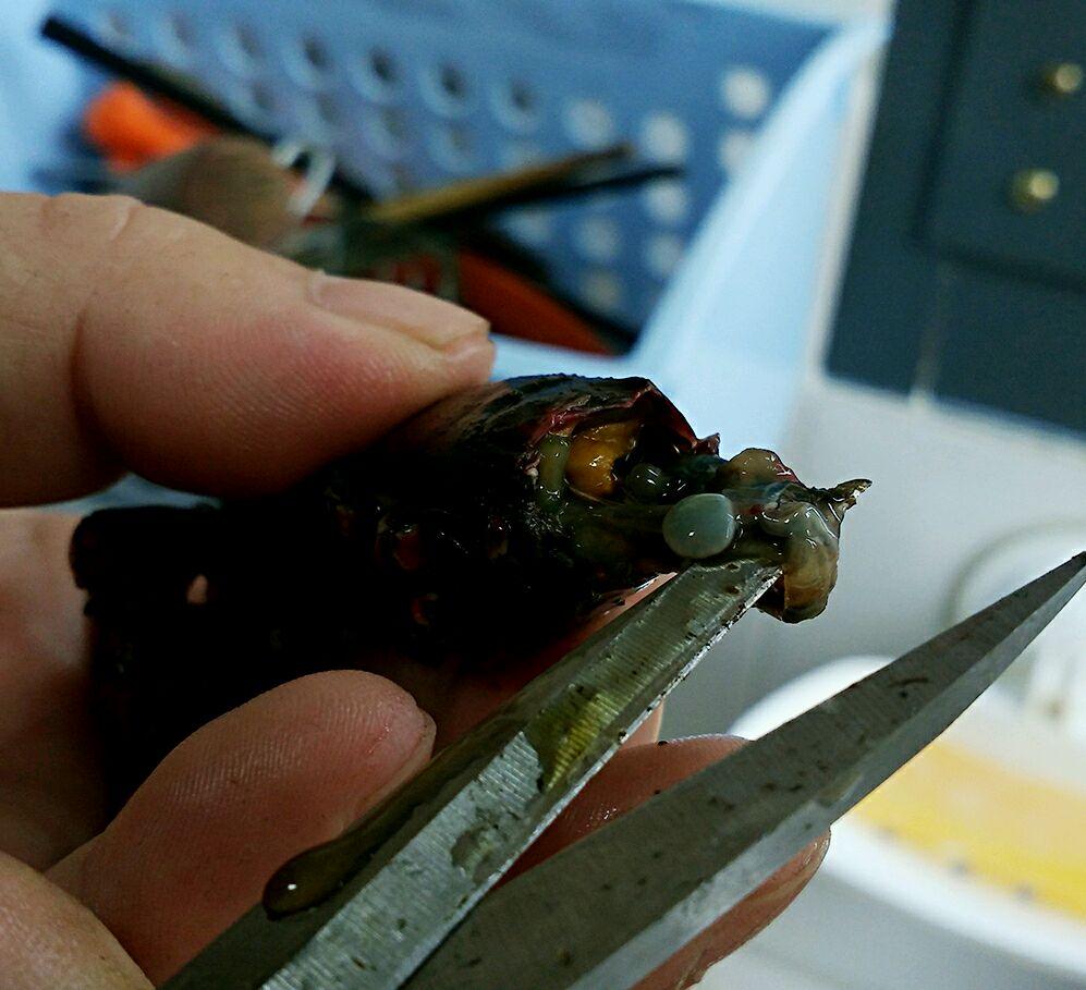 最干净的小龙虾清洗方法