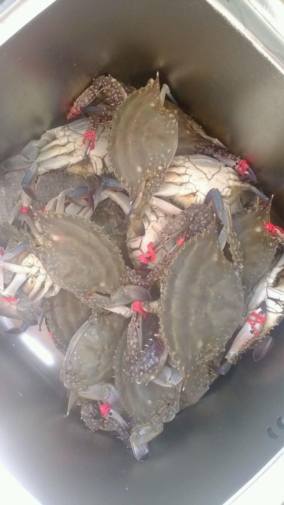 清晨两点去海鲜市场挑选最新鲜的活螃蟹