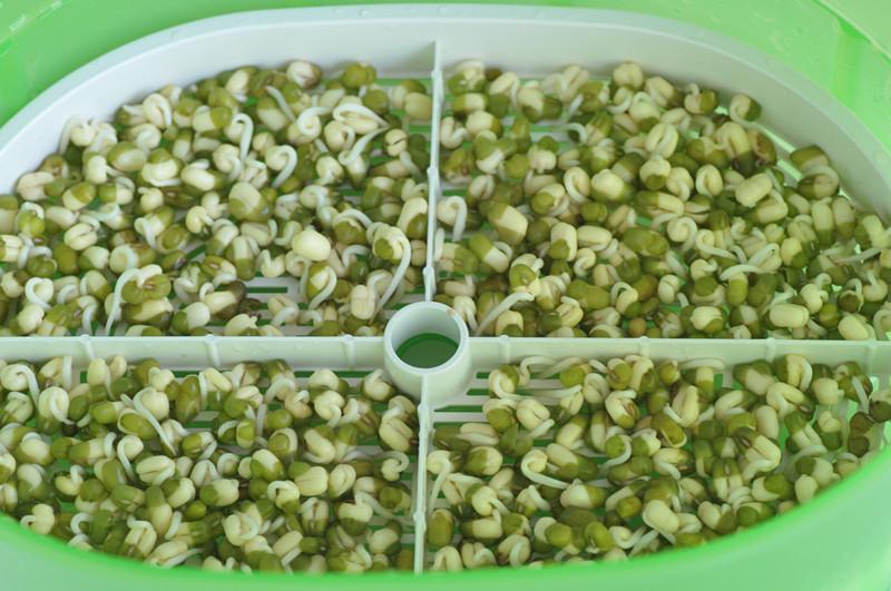 春天种豆芽的做法步骤