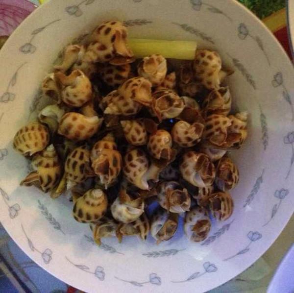 海螺吃法图片大全